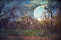 The Mystic Moon (ulli_p) Tags: blue light sky moon art texture nature colors rural photoshop landscape thailand asia southeastasia colours textured isan likeapainting flickraward texturedphoto ruralthailand awardtree artofimages exoticimage canoneoskissx5