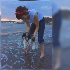 ぽーちゃん 初めての海に どうしていいかわからずの ご様子🐶. 砂浜は気にいったみたいです👍 #kakiuchiayami#pocota#love#垣内彩未