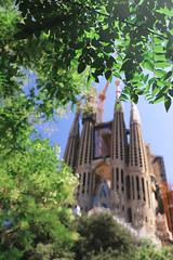 Sagrada Familia (Hydezhao) Tags: summer tree green spain cathedral sagradafamilia barcelone