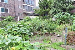 Vegetable Garden (Time Sprit ()) Tags: afsnikkor1735mmf28difed