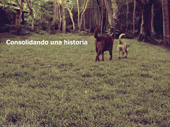 Consolidando una Historia (Marco San Martin) Tags: two portrait texture textura dogs composition photoshop landscape friendship dos perros animales amistad perritos youandme tuyyo