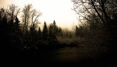 first late snow...explored... (A. Wrench) Tags: darkness solstice wintersolstice trees forest stream shortdays winter river water silhouette landscape shore snow nature wisconsin morning hardwoods evergreens overcast frozen wilderness woods quiet silence