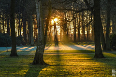 SUNSET. (Welcome in a wild world) Tags: sun sunset sunlight tree wood winter shadow colder cold land landscape epic serenity foret nature vegetation plant arbres soleil gel froid hiver