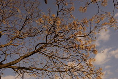 Kamo-gawa River Side Trees (eefzed) Tags: nature kamogawa kamoriver kamo trees river blue sky bluesky cloud japan kyoto 日本 京都 鴨川 carlzeiss carlzeisss contax cy carlzeisscy carlzeisscontaxcy contaxczy zeisscontaxcy distagon2835 distagonpc3528cy contaxpc3528cy zeisscontaxpc3528cy