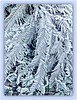 Frosted Fern (Marcia Portess-Thanks for a million+ views.) Tags: frostedfern marciaaportess marciaportess map ferns plants foliage frost ice icy icyplants leaves patterns texture cold freezing art elarte photoart contemporaryart nature lanaturaleza frio nieve glacial helecho winter stanleypark abstract