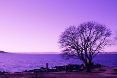 Tree with a view. (beate_kf) Tags: norwaynature oceanview