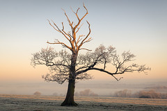 Surviving (JamesPicture) Tags: frost staffordshire stallington staffs moorlands stokeontrent tree frozen mist life
