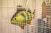 49/52: Bird cage with perch (judi may - mostly off for a while) Tags: project52 birdcage perch fish birdcagewithperch cage tag canon7d 50mm