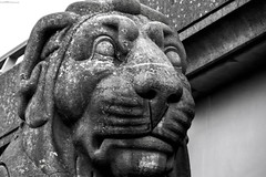 Round Wales Walk 67 - Forgotten (Nikki & Tom) Tags: roundwaleswalk walescoastpath wales uk britain gwynedd britanniabridge blackwhite lion statue face