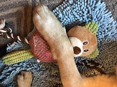 Glinda's Paw and a Stuffed Toy (hbickel) Tags: glinda dog labadorretriever lab toy stuffedtoy iphone6splus iphone
