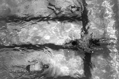 Different Strokes (rosiebondi) Tags: bw bnw blackandwhite water ocean movement australia leica