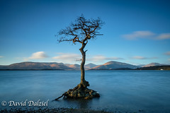 Milarrochy Bay (ddl58) Tags: 2017 balmaha bay ben dawn loch lochlomondthetrossachsnationalpark lomond milarrochy newyearsday scotland tree winter