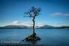 Milarrochy Bay (ddl58) Tags: 2017 balmaha bay ben dawn loch lochlomondthetrossachsnationalpark lomond milarrochy newyearsday scotland tree winter