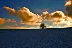 A lonely tree - Ein einsamer Baum - explored (cammino5) Tags: 2017 januar winter schnee snow hüttenheim steigerwald franken bayern deutschland gegenlicht baum