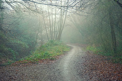 Into the Mist (| Voiceb[ ]x Photography |) Tags: horsham misty fog path gray grey walk trees forest leaf leaves green brown light through sonya6000 ilce6000 adamvoice photography photo uk westsussex alone future infront what winter 2017 camera branches twigs ground floor meander curve bend open narrow dull mist dew visibility poor scary atmospheric