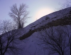 Eyes For The Other Side (LeBaroDea) Tags: canyon horizon tree citycreek saltlakecity utah wasatch ridge glow bright sunlight edge bonnevilleboulevard lone contrast afternoon set branches limbs shadow hill slope lebarodea
