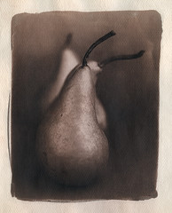 Pears 02 (Toned cyanotype version - 2017) (sirolajos) Tags: cianotipia cyanotype toned altprocess 25x20 fabriano aquarell paper historical photographic printing processes alternativephotograpycom fomapan linhof