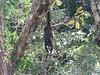 IMG_9131 (dstylebda) Tags: colonpanama gatunlake tamarins howlermonkeys sloth