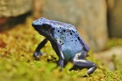 Frog (Hugo von Schreck) Tags: hugovonschreck frog frosch canoneos5dsr greatphotographers