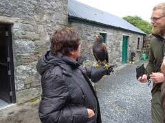 Falconary Ireland015