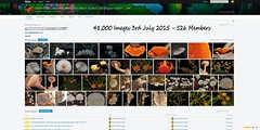 48,000 Images, 3rd July 2015 - IDENTIFYING AUSTRALIAN RAINFOREST PLANTS,TREES and FUNGI Flickr Group (Black Diamond Images) Tags: screenshot rainforest native images milestones identifying 2015 rainforests australianflora australiannativeplants australianplants 48000 rainforestflora rainforestplants australianrainforest arfp 372015 47000 australianrainforests idrainforestgroupmilestones australianrainforestflora arfmilestone identifyingaustralianrainforestplantstreesandfungigroup idrainforestgroup rainforestidentification australianrainforestplantsrainforestplant 48000th 48000images 48000thimage