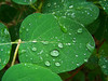 After The Rain (J Swanstrom (Never enough time...)) Tags: green texture water rain drops kodak drip dx7590 jswanstromphotography
