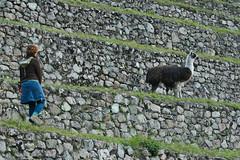 Peru-8555.jpg (Matt and Debbie) Tags: peru llama 2015 wayna winaywayna wiay