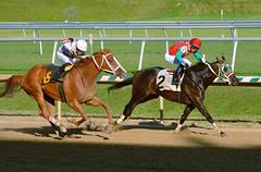 "2015-07-31 (74) r6 Victor Carrasco on #2 Outwithbigdaddy (JLeeFleenor) Tags: photos photography md marylandracing marylandhorseracing laurelpark jockey جُوكِي ""赛马骑师"" jinete ""競馬騎手"" dżokej jocheu คนขี่ม้าแข่ง jóquei žokej kilparatsastaja rennreiter fantino ""경마 기수"" жокей jokey người horses thoroughbreds equine equestrian cheval cavalo cavallo cavall caballo pferd paard perd hevonen hest hestur cal kon konj beygir capall ceffyl cuddy yarraman faras alogo soos kuda uma pfeerd koin حصان кон 马 häst άλογο סוס घोड़ा 馬 koń лошадь stretchrun stretch maryland"
