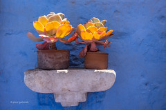 Holding hands (pietkagab) Tags: potted plants suculent clay wall blue texture shelf light arequipa peru decoration design arrangement painted pietkagab piotrgaborek photography pentax pentaxk5ii travel trip tourism