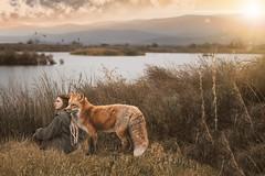 Hijos del Lago (B l u e A i r) Tags: photoshop fotocomposición zorro pelirroja paisaje lago naturaleza fauna juncos atardecer landscape sunset fox redhead lake nature animal madrid