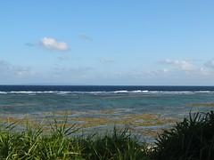 DSCF0606 (cheico) Tags: 奄美大島 amamioshima