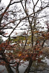 Todaiji Temple, Nara (Syahrel Azha Hashim) Tags: autumnseason autumn todaijitemple nature sony 2016 fall holiday colourfulleafs simple trees details palace a7ii waterstream branches temple dof 35mm river touristattraction stream ilce7m2 season sonya7 getaway handheld tree colorimage vacation destination prime light naturallight taisho shallow colorful nara beautiful travel syahrel shrine clearsky colors leafs traveldestination lake japan detail