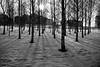 *** (Misha Sokolnikov) Tags: moscow russia snow trees tree sunset shadow leica leicamonochrom 50mm aposummicron apo leicamm leicamsystem leicacamera blackandwhite blackwhitephotos noi noitetblanc blancoynegro