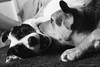 happy new year! :) (stephubik) Tags: liza bubak dogs playing