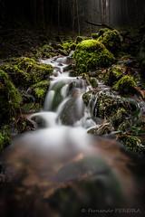 Ruisseau (Fernando.P.Photo) Tags: eau foret poselente torrent flickrunitedaward
