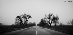 """""""The most beautiful thing that we can experience is the mysterious. It is the source of all true art and science."""" A.E. (d_dobreff) Tags: nikon d3300 kit lens blackandwhite photography bw monochrome outdoor landscape empty lone lonely road trees whiteness sky melancholy horizon perspective mist misty trip trippy tripping winter timeless"""