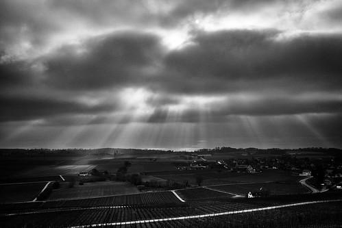 Sunbeams on the Féchy vineyards