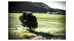 e l   o l m o   y   e l   m a r (creonte05) Tags: explore eduardomiranda flickr nikon d7100 arbol 2017 olmo tree color arte paisaje chile nature landscape blur flickr2017 naturaleza art exteriores icm