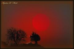 Il sole rosso - Gennaio-2017 (agostinodascoli) Tags: photoshop photopainting nature tramonto sunset agostinodascoli texture art digitalart sole digitalpainting alberi creativephotography
