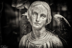 Damaged Angel (Daz Smith) Tags: dazsmith fujixt10 fuji xt10 andwhite bath city streetphotography people candid canon portrait citylife thecity urban streets uk monochrome blancoynegro blackandwhite mono wings bust stone damaged angel