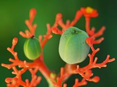 P1190006 copy (waldy5897) Tags: verde green olympus verte em10 sigma orange anaranjado 60mm