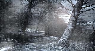 Trees tone