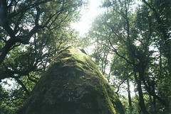 (Alejandro Prez Rizo) Tags: summer musgo green film canon moss plantas guimaraes oporto compact 2014 compacta