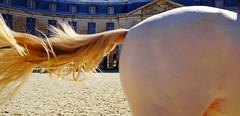 A Tail of Versailles (PM Kelly) Tags: tail horse tale white académie équestre de versailles france academy equestrian ride