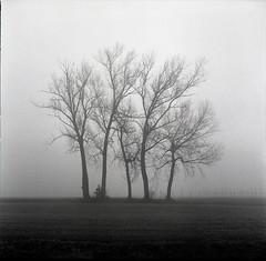 (Fabio Corò - PARMA) Tags: nebbia fog hasselblad 500 cm distagon 50mm pianura padana ilford hp5 fotografia analogica medio formato film pellicola parma winter 2016