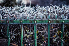frosty fence (ewitsoe) Tags: fence fencefriday friday poalnd poznan frost cold chill winter morning colder chilly iron bush hedge ewitsoe nikond80 35mm hff hffhappyfencefriday