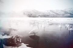 Sometimes you will never know the true value of a moment until it becomes a memory. (siew_wei) Tags: likeapainting onsen snow nature memories kotan travel japan hokkaido landscape outdoor painting blackandwhite lake winter swans