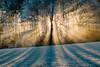 La nature en connaît un rayon pour nous séduire. (Valentin le luron) Tags: 20170105 nikon 800 e nature paysage forêt brume givre lumière soleil contrejour peneylejorat vaud romandie suisse neige yves paudex lausanne brilliant