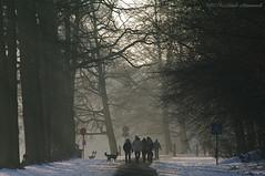 Tervuren.Belgium (Natali Antonovich) Tags: tervuren belgium belgie belgique winter snow frost christmas christmasholidays nature walking walk tradition dog animal silhouette