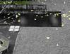 Herfst (Merodema) Tags: fall leaves herbst herfst herfstig ban bankje bench vlakken bladeren zww bw gevallen fallen black zwart vlak vierkanten grind pebbles
